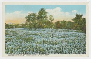 Primary view of object titled '[Postcard of Bluebonnet Field Near Capitol]'.