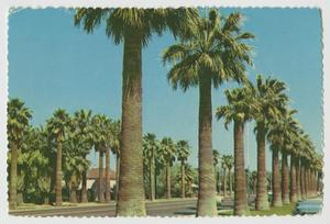 Primary view of object titled '[Postcard of Central Avenue in Phoenix]'.