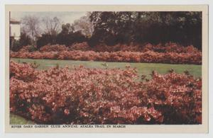 Primary view of object titled '[Postcard of River Oaks Garden Club #1]'.