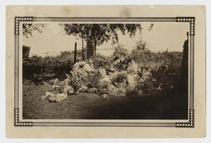 Primary view of object titled '[Photograph of Graves]'.