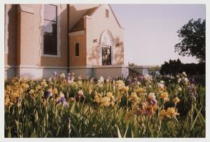 Primary view of object titled '[Photograph of Iris Garden]'.