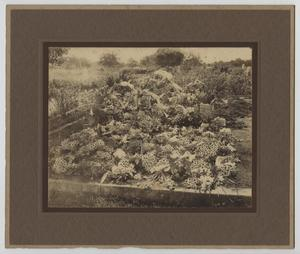 Primary view of object titled '[Photograph of Grave at First Street Cemetery]'.