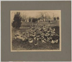 Primary view of object titled '[Photograph of Grave at Oakwood Cemetery in Waco]'.