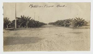Primary view of object titled '[Photograph of McAllen-Pharr Road]'.