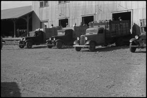 Primary view of object titled '[Photograph of Men Loading Trucks]'.