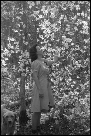 Primary view of object titled '[Photograph of Woman and Dogwood Trees]'.