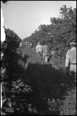 Primary view of object titled '[Photograph of Workers at Fruit Farm]'.