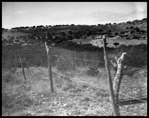 Primary view of object titled 'Ranch Scenes'.