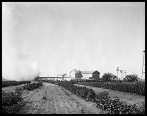 Primary view of object titled 'Cotton Field & Cotton Gin'.