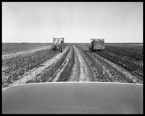 Primary view of object titled 'Cotton Picking & Cotton Ginning'.