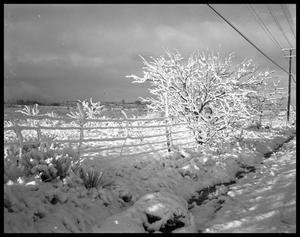 Primary view of object titled 'Snow and Barbed Wire'.