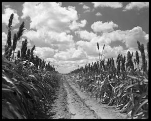 Primary view of object titled 'Crops'.
