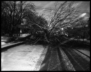 Primary view of object titled 'Snow Shot and Fallen Tree'.