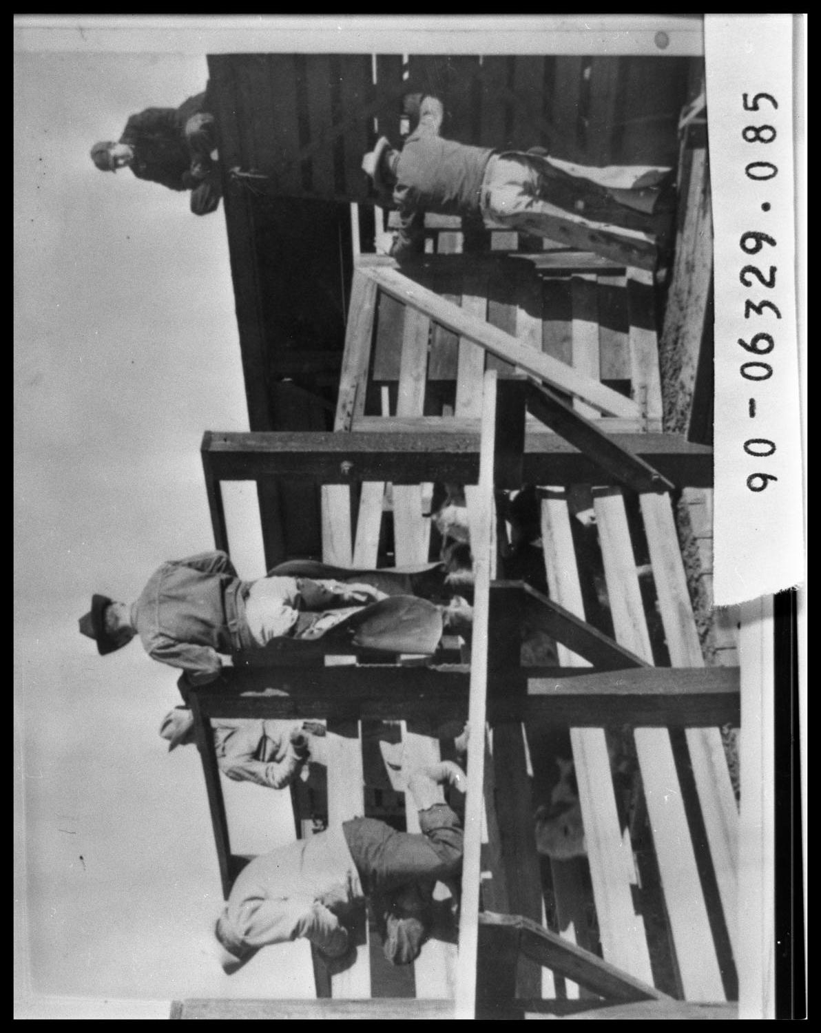 Men Unloading Cattle From Rail Car                                                                                                      [Sequence #]: 1 of 1