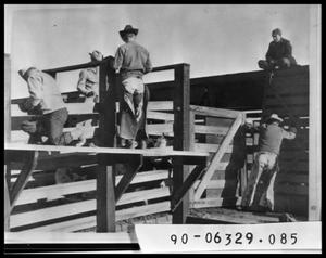 Primary view of object titled 'Men Unloading Cattle From Rail Car'.