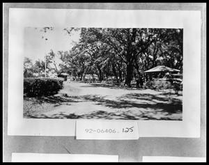 Primary view of object titled 'People Under Trees'.