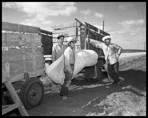 Primary view of object titled 'Plowing Cotton'.