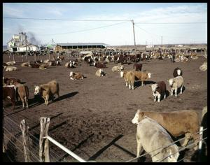 Primary view of object titled 'Edgar Davis Feed Lot #1'.