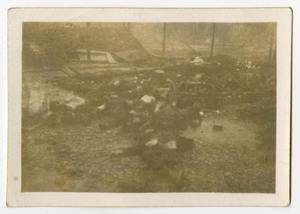 Primary view of object titled '[Photograph of Bodies in Landsberg Concentration Camp]'.