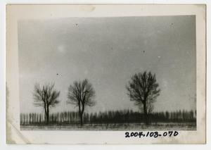 Primary view of object titled '[Photograph of Tree Line in France]'.