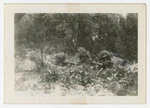 Primary view of object titled '[Photograph of Camouflaged Soldiers]'.