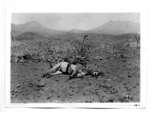 Primary view of object titled '[Fallen Donkey]'.