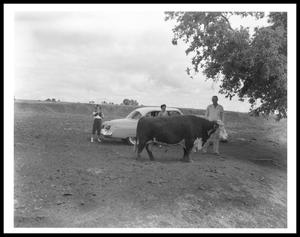 Primary view of object titled '[Johnson Family with a Bull]'.