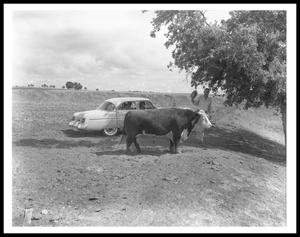 Primary view of object titled '[Lyndon Johnson Waving His Hat Behind a Bull]'.