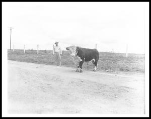 Primary view of object titled '[Lyndon Johnson and a Bull at a Dirt Road]'.