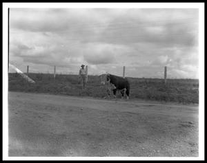 Primary view of object titled '[Lyndon Johnson Standing near a Bull]'.