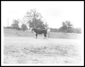 Primary view of object titled '[Lyndon Johnson Behind a Bull]'.