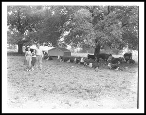 Primary view of object titled '[Johnson Family Standing Near Cattle]'.