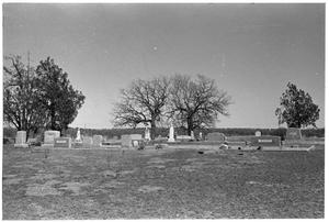 Primary view of object titled '[Cemetery with Trees]'.