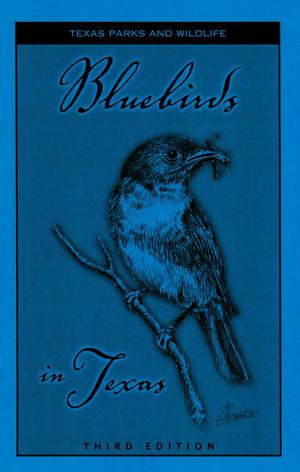 Primary view of object titled 'Bluebirds in Texas: 3rd Edition'.