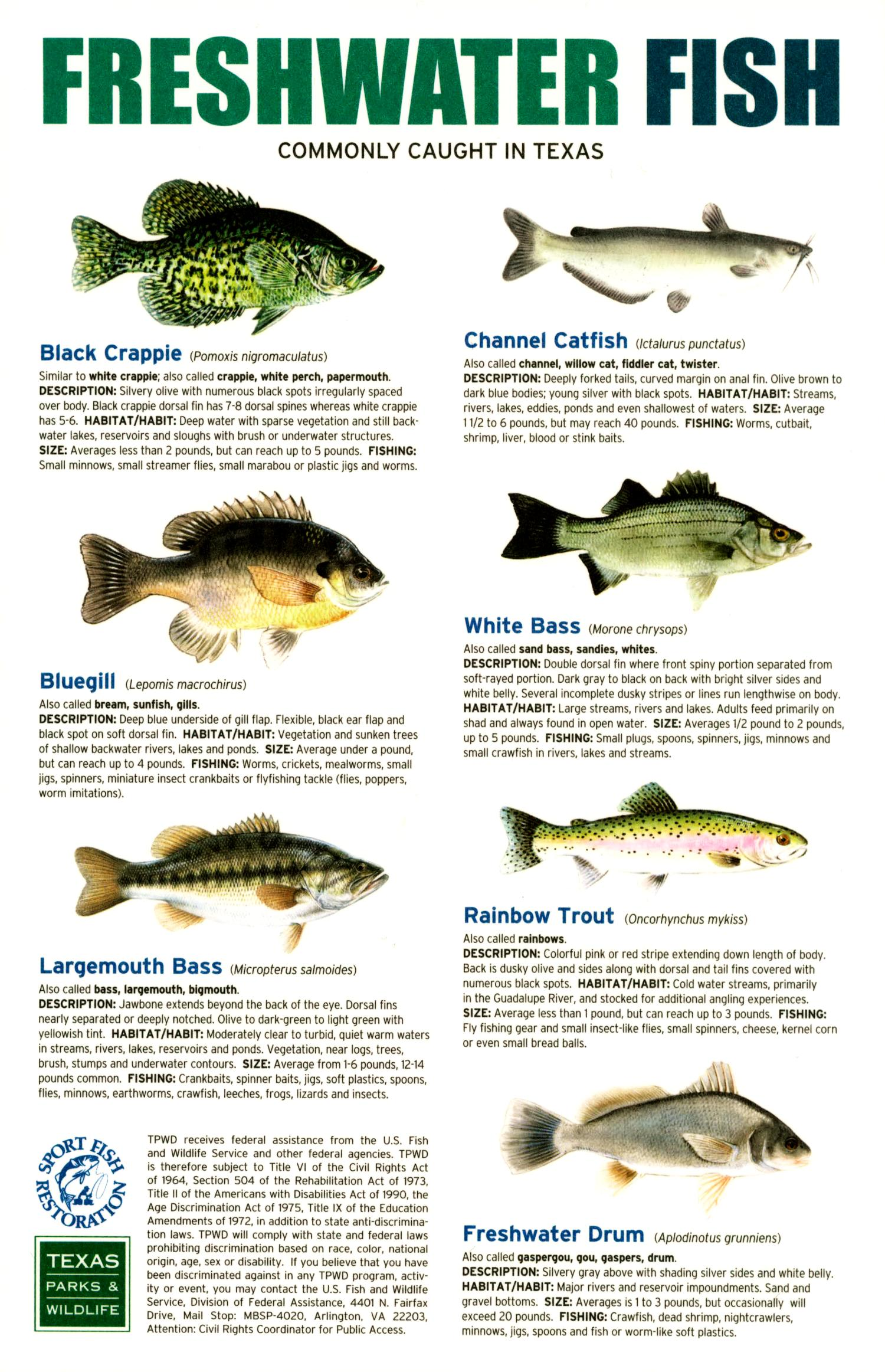 Freshwater and saltwater fish commonly caught in texas for Freshwater fish in texas