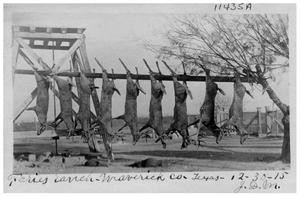 Primary view of object titled '[Deer kill at Faries Ranch, Maverick County, Texas]'.