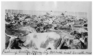 Primary view of object titled 'Pushing cattle from big corral into  small pen'.