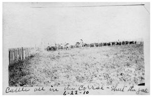 Primary view of object titled 'Cattle all in the corral:  Shut the gate'.