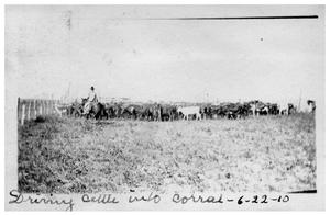Primary view of object titled 'Driving cattle into corral'.