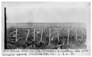 Primary view of object titled '800 steers all in the corral - shutting the gate [at] Welder's Ranch'.