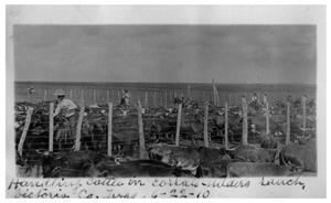 Primary view of object titled 'Handling cattle in corrals [on] Welder's Ranch'.