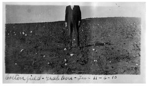 Primary view of object titled 'Cotton field, Graham, Texas'.