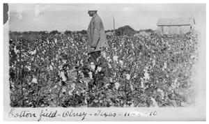 Primary view of object titled '[Man standing in] cotton field  in Olney, Texas'.