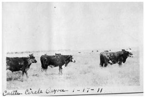 Primary view of object titled 'Cattle at Circle Bayou'.