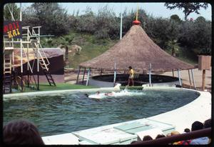 Primary view of [Swimming with Dolphins at Seven Seas]