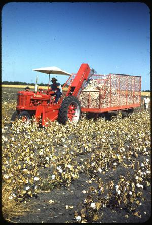 Primary view of object titled '[Harvesting Cotton]'.