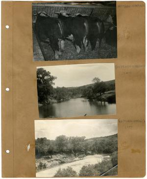 Primary view of object titled '[Three Photos of Clear Fork and Cattle on a Scrapbook Page]'.