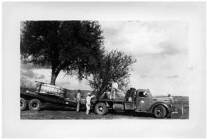 Primary view of object titled '[Truck Carrying Trees]'.