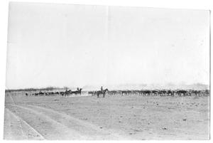 Primary view of object titled '[Herd of Cattle  with Three Cowboys]'.
