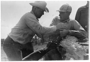 Primary view of object titled '[Cowboys Restraining a Calf]'.